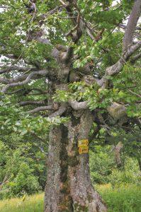 Гърмящата гора